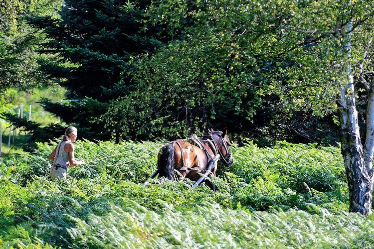 Restaurer les milieux naturels de la Sapia dans le Parc Naturel Régional du Pilat dans la Loire