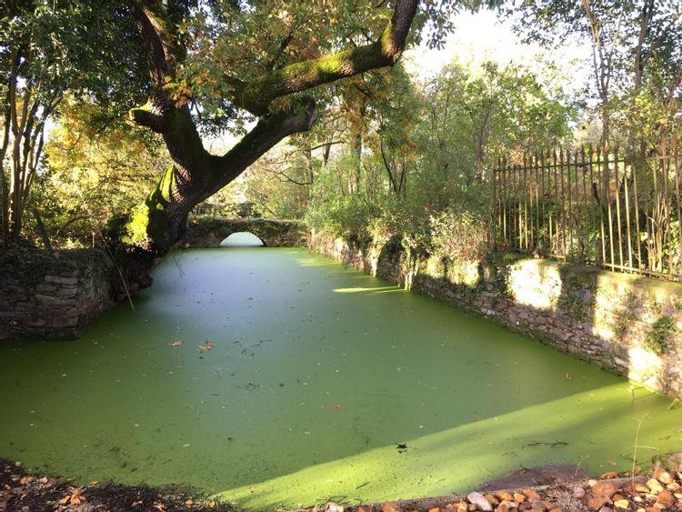 Pont et Douves de l'ancien château de Montpinier à BLAN (81)