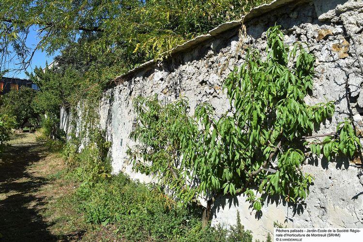 mur à pêches de montreuil