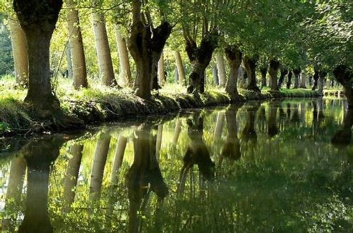 Les arbres Têtards